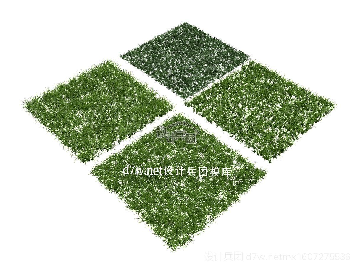 d7w植物01 .jpg